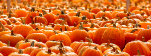 Pumpkins | Markbeech Marketing
